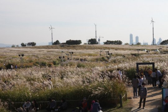 Festival Rumput Perak Seoul akan dibuka pekan ini