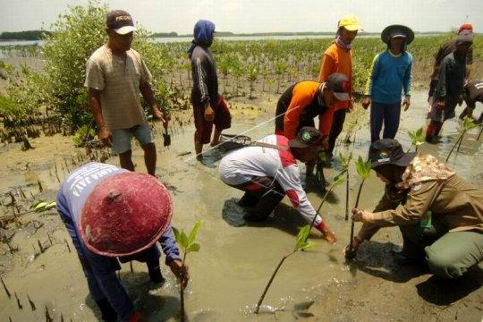 Menanam mangrove Page 1 Small