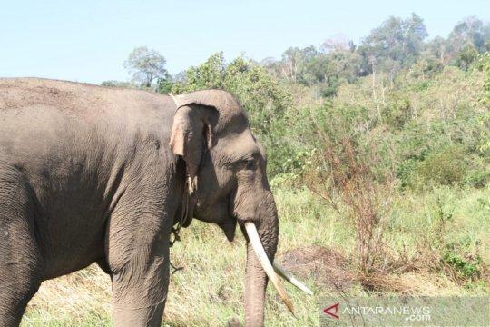 Warga minta konflik gajah butuh penanganan tuntas dari pemerintah