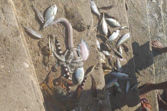 DKP: Belum ada laporan kesehatan terganggu akibat konsumsi ikan mati