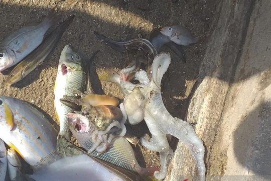 LIPI imbau masyarakat tidak panik dengan kematian ikan di Tanimbar