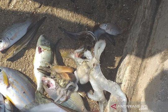 Benarkah fenomena ikan mati mendadak di Maluku terkait dengan gempa?