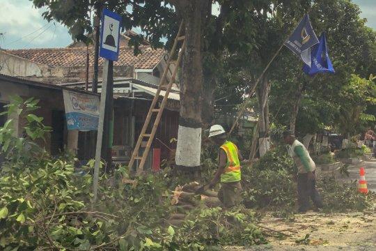 Jelang musim hujan, DLH Yogyakarta intensifkan pemangkasan pohon