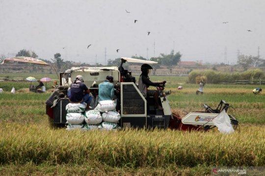 Anggota DPR: Sektor pertanian lokomotif penyelamat dari resesi