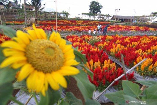 Pemanfaatan lahan tandus menjadi kebun bunga
