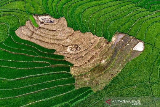 Lima tahun Jokowi-JK menuju kemandirian pangan