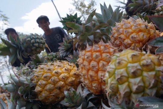 Soal pestisida tuntas, Indonesia ingin tingkatkan ekspor nanas ke AS