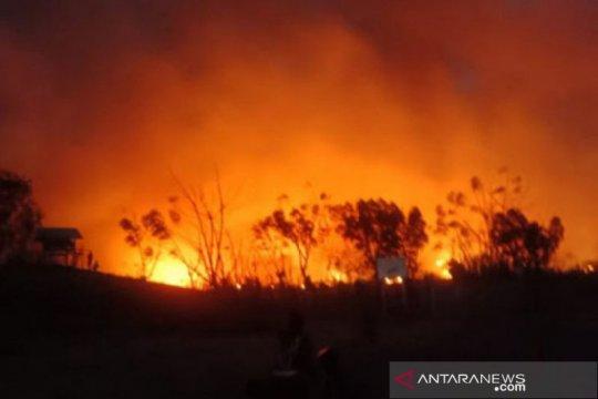 Areal sabana Gunung Tambora terbakar