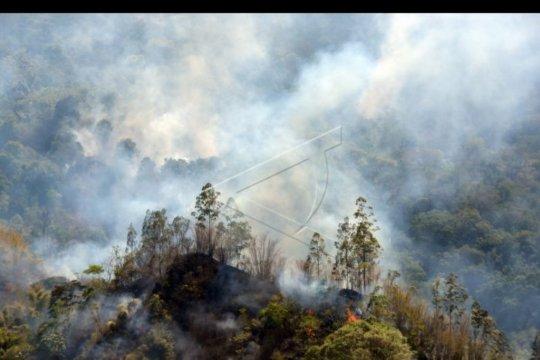 Kebakaran hutan dan lahan di Kintamani
