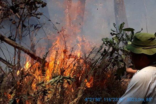 Kebakaran hutan Gunung Rinjani Lombok meluas