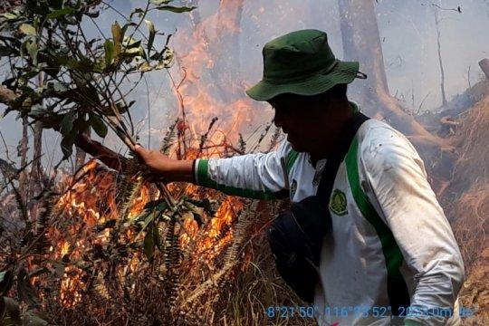 TN Gunung Rinjani: Para pendaki aman ketika hutan terbakar
