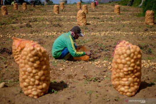 Pemerintah akan berikan insentif bagi 2,44 juta petani