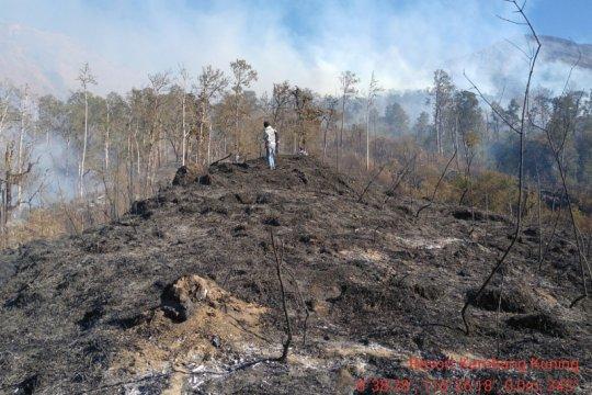 6.055 hektare hutan Gunung Rinjani terbakar