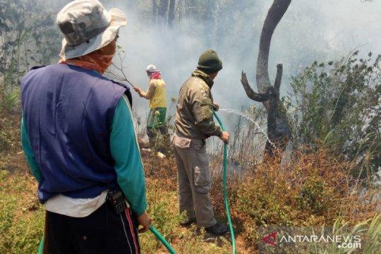 Dishut: 731.413 hektare hutan Sultra terbakar