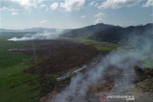 Kebakaran Lahan Gambut di Kolaka Timur