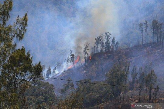 Kebakaran masih landa kawasan gunung Ranti Banyuwangi