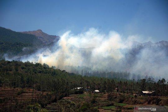 Kebakaran hutan pinus Malino makin meluas
