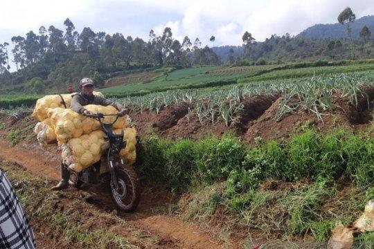 Pemerintah harus keluarkan putusan politik wujudkan ketahanan pangan