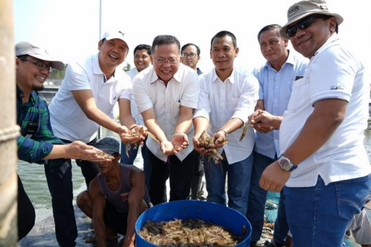 PTPN IX panen raya udang vaname di Pemalang