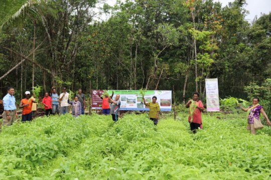 Dukung kemandirian ekonomi, Korindo ajari masyarakat Papua bercocok tanam