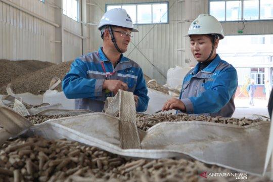 Potensi biomassa pengganti batu bara capai 20.925 ton