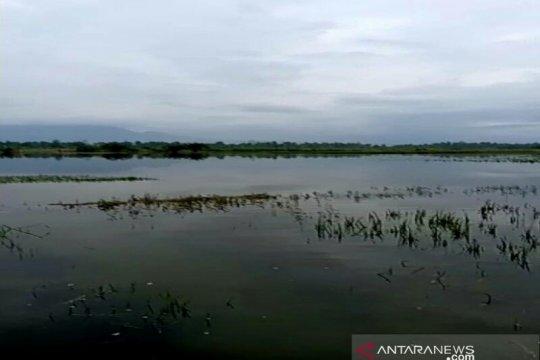 Puluhan hektare sawah di Tapanuli Selatan terendam banjir