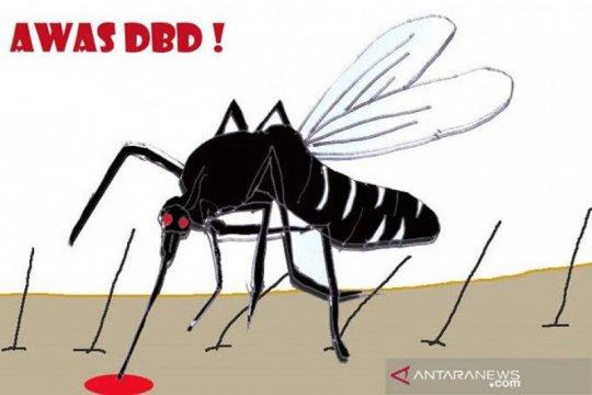 Dokter:  Cegah DBD dengan jaga kebersihan lingkungan