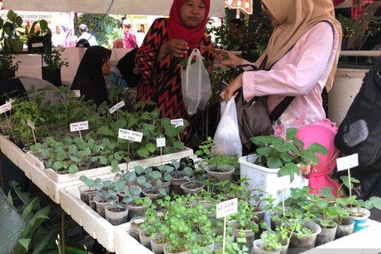 Lahan terbatas, Pemkot Yogyakarta dorong kampung buat taman sayur
