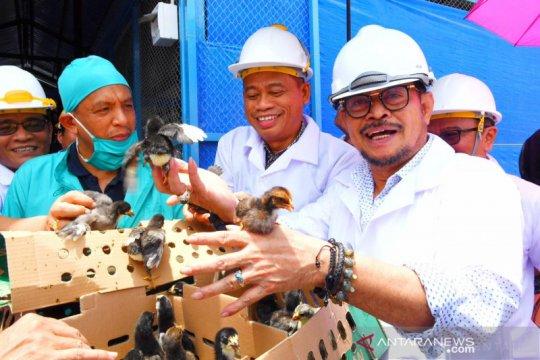 Mentan SYL ingin Makassar kembangkan bibit ayam DOC secara mandiri