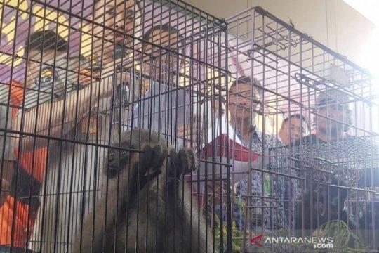 Polda Jabar tangkap pelaku jual beli satwa yang dilindungi