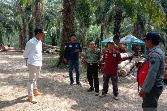 """Dinas Kehutanan cabut izin industri """"illegal loging"""" di Tanah Laut"""