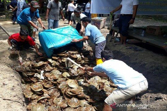 BBKSDA Riau musnahkan ribuan satwa dilindungi belangkas sitaan