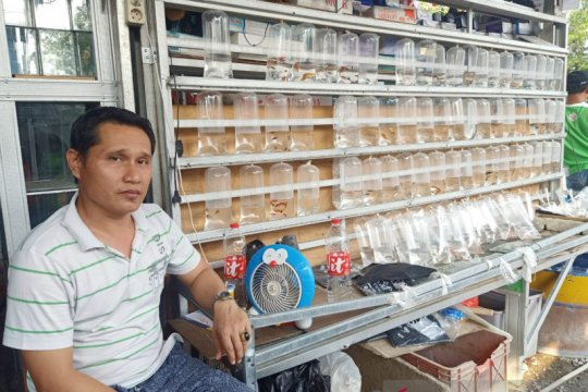 Sejumlah varian ikan hias Jatinegara hilang akibat kemarau panjang