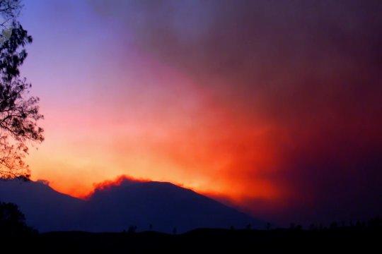 35 hektar lebih kawasan Gunung Argopuro terbakar
