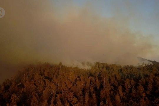 Kebakaran hutan Gunung Ijen capai 300 hektar lebih
