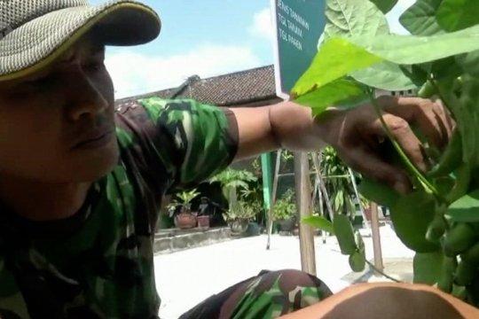 Prajurit TNIjadi sosok inspiratif penggerakkampung hijau