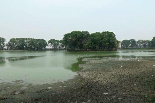 Danau Tasikardi di Serang Banten mengering akibat kemarau