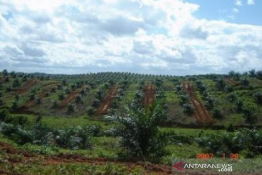 Dinilai berhasil, asosiasi petani sawit minta pola PIR dipertahankan