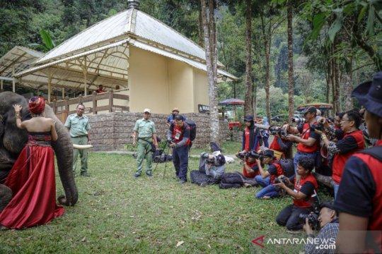 Taman Safari siapkan puncak acara lomba foto satwa IAPC 2019 di Bogor