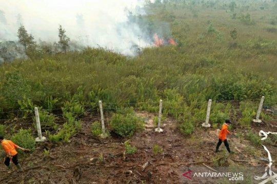 BPBD Sumsel: 255.904 hektar lahan terbakar akibat karhutla