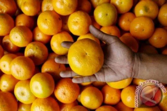 Seni terapi dengan jeruk