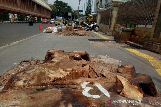 KPBB: Penebangan pohon Cikini langgar komitmen Jakarta lindungi iklim