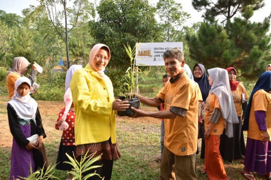 UI kembangkan budidaya tanaman rempah-rempah untuk tata lahan desa