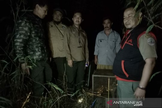 Di hutan Kamojang-Garut, BKSDA lepasliarkan tiga kukang jawa
