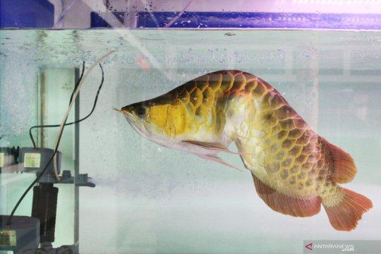 KKP tetapkan 20 jenis ikan termasuk jenis dilindungi