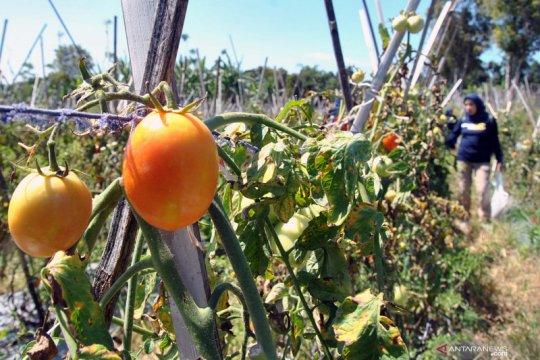 Lapas Nunukan kembangkan kawasan wisata agro dan edukasi