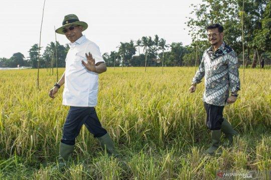 Mentan dan Kepala Staf Kepresidenan panen padi di Karawang