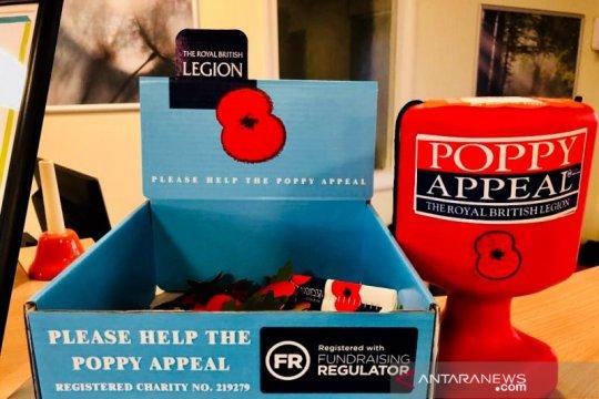 Poppy, lambang hari pahlawan di Inggris