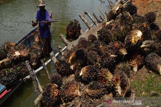 Produksi minyak sawit Malaysia turun picu naiknya harga sawit Riau