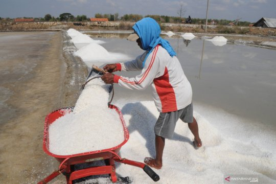 Presiden izinkan impor langsung garam industri untuk bahan baku